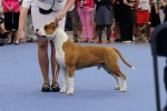 World Dog Show 2014 Finland, Helsinki
