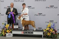 Deal King Of Ring's. STCA's 78th National Specialty. October 2, 2014. Winners Dog Competition